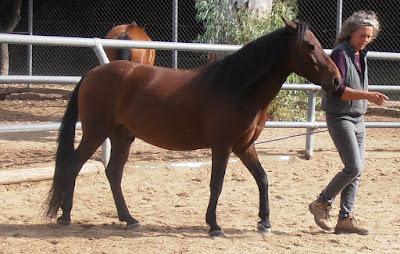 mit-pferden-im-hier-und-jetzt.blogspot.com