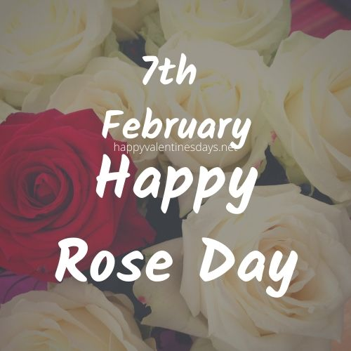 february special day : 7 feb happy rose day 2021