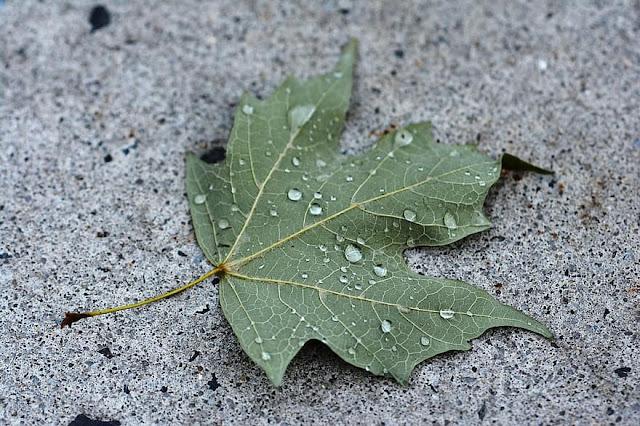 ما هي الخرسانة الخضراء؟ المميزات والعيوب