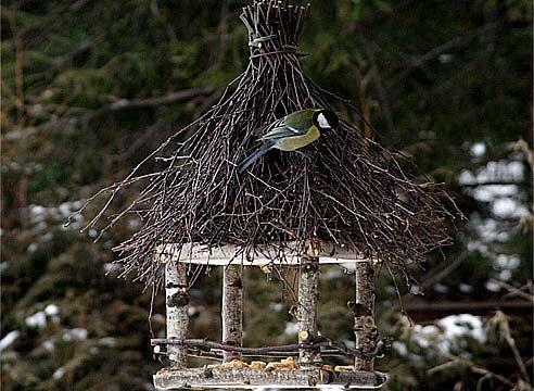 Обряды с прикормом птиц: как привлечь удачу и изобилие