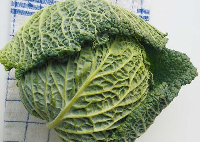 Ein grüner Kopf Wirsing auf einem Küchentuch