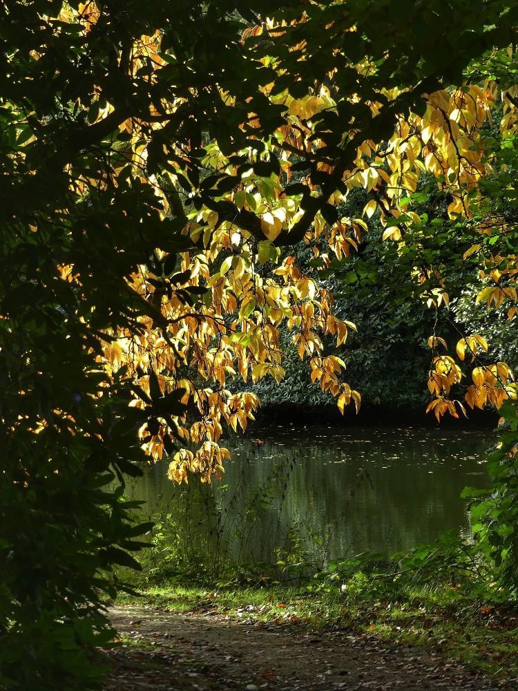 Herbstfarben,  Herbstspaziergang