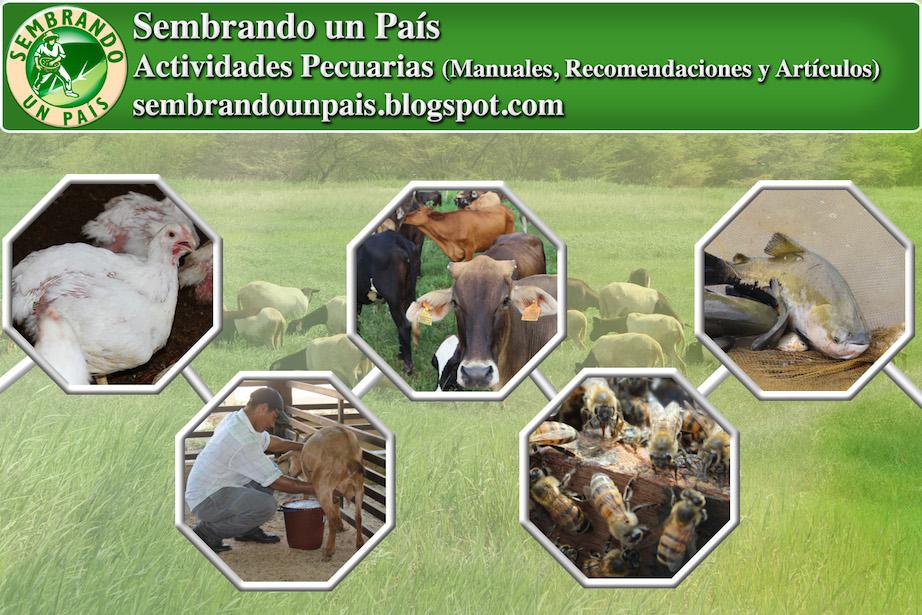 Información en ganadería, avicultura, apicultura y más