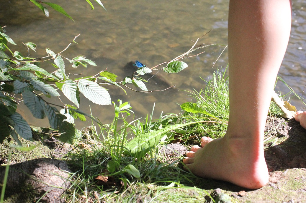 Vážky v Národním parku Podyjí