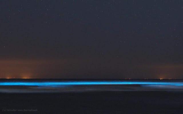 الدموع الزرقاء تظهر على طول الساحل الغربي لهولندا