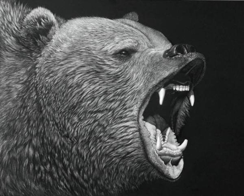 14-The-Warning-Bear-Lorna-Hannett-Animals-Drawings-Scratched-out-of-Ink-with-the-Scratchboard-www-designstack-co
