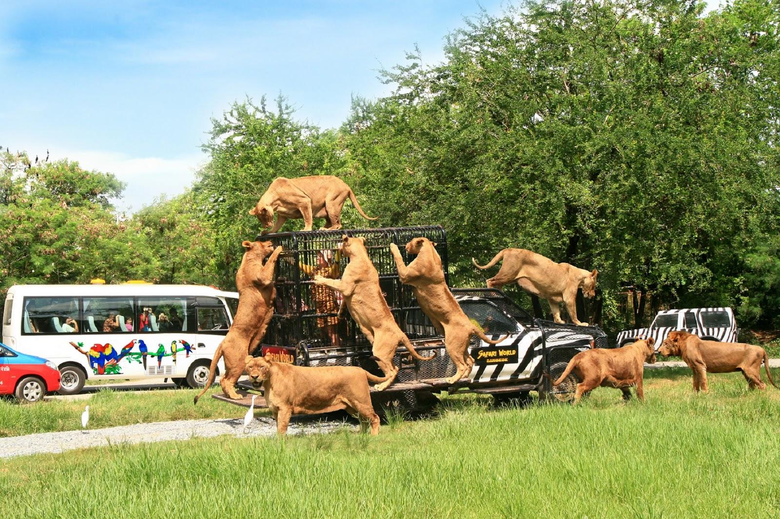 Công viên Safari World