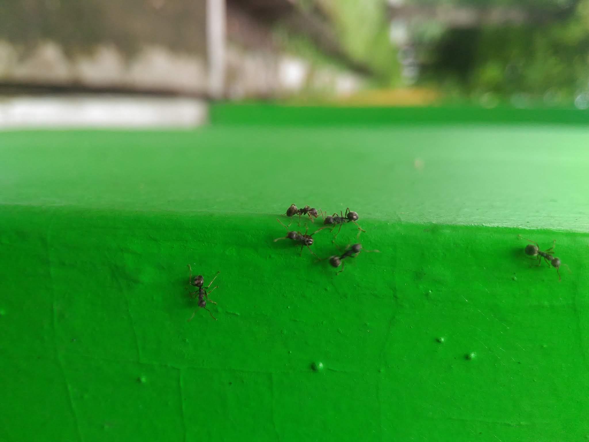 kisah teladan semut