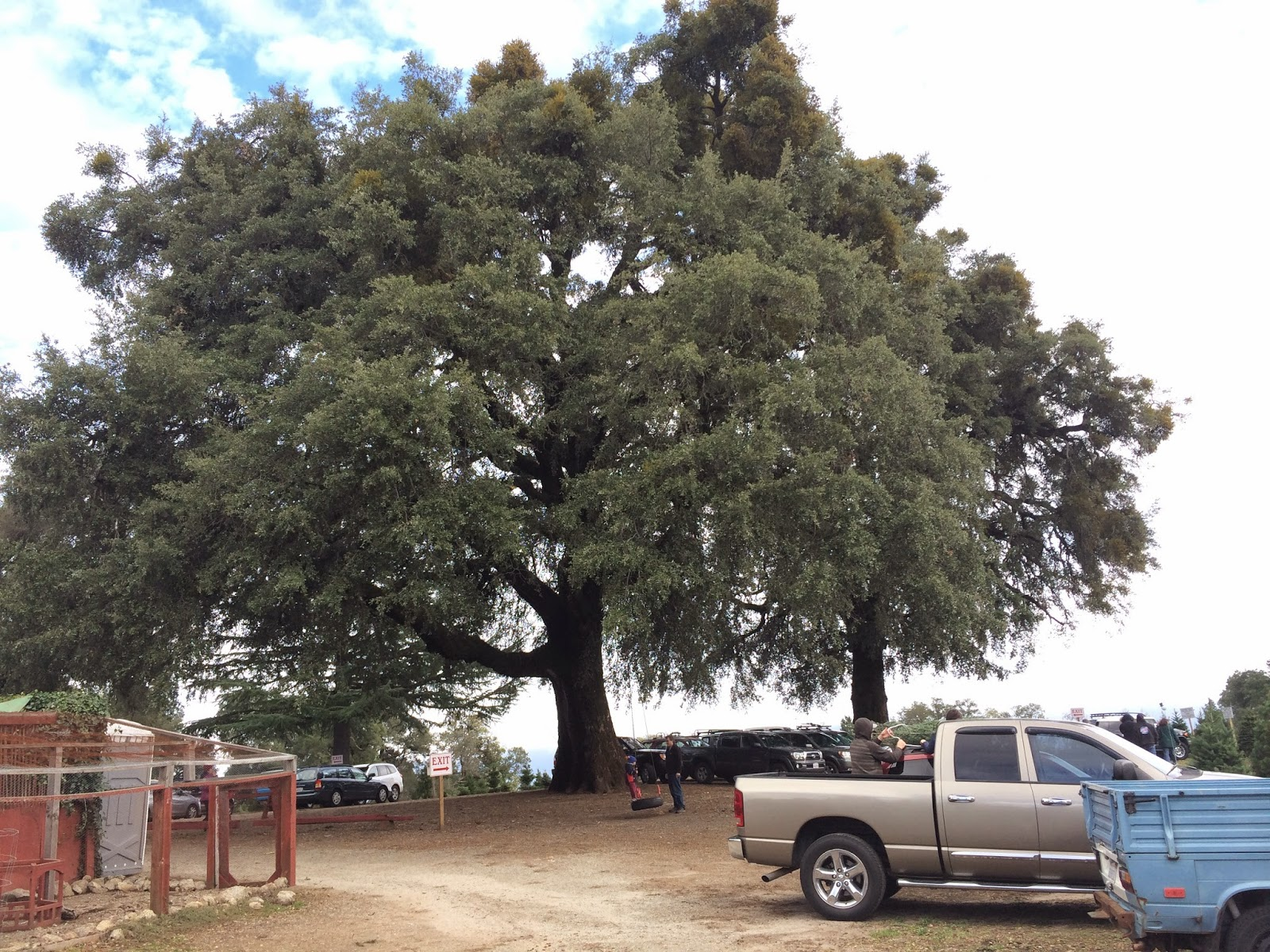 Christmas Tree Farms Santa Cruz