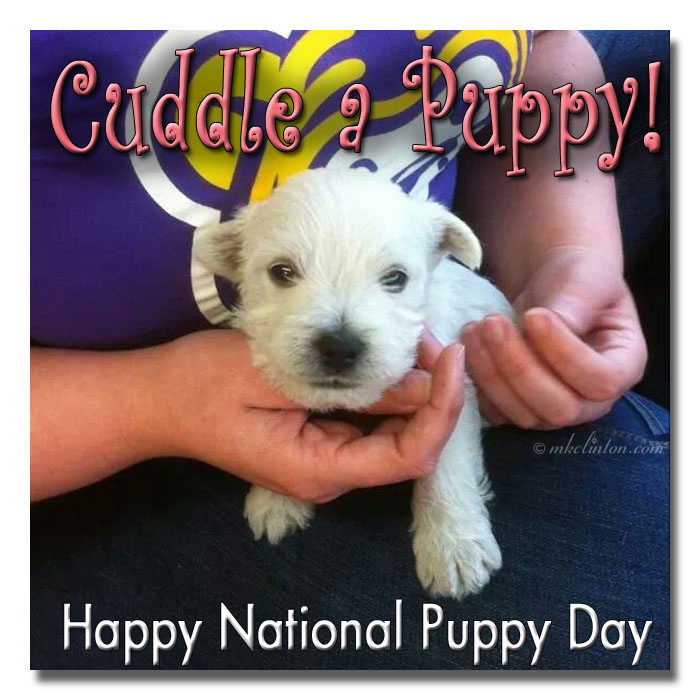 Pierre Westie as a puppy. Cuddle a Puppy meme for National Puppy Day