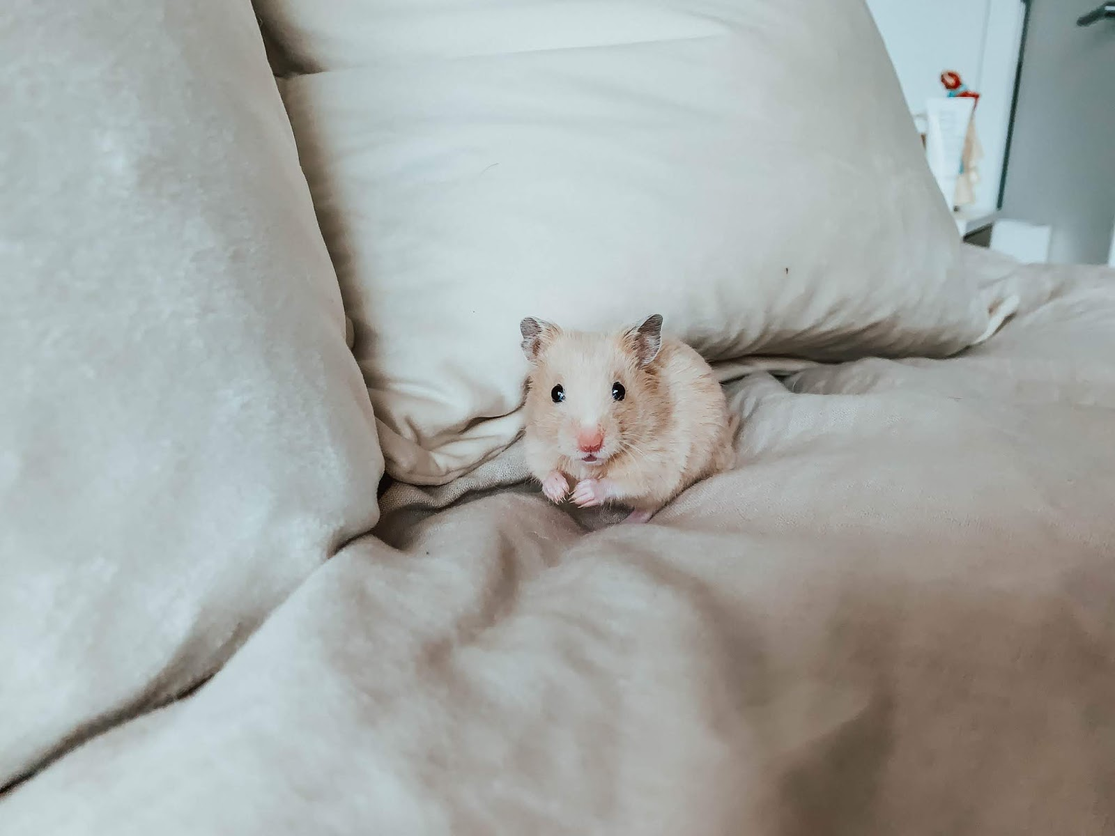 I GOT A HAMSTER! & Other Things I'm Doing During Quarantine