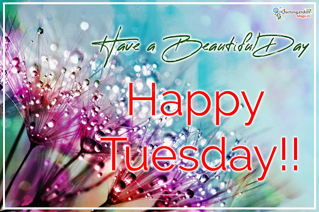 love happy tuesday images have beautiful day images quotes