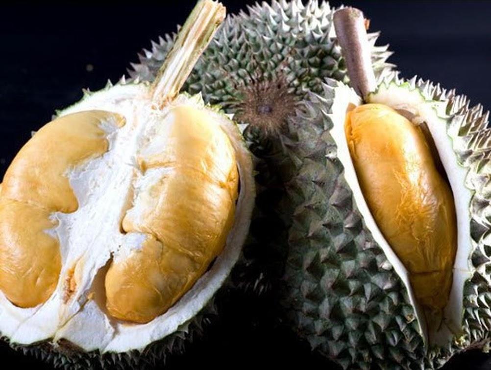 Bibit Durian Duri Hitam Kalimantan Tengah