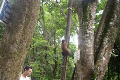 Macacos próximo à Fonte dos Amores, em Poços de Caldas