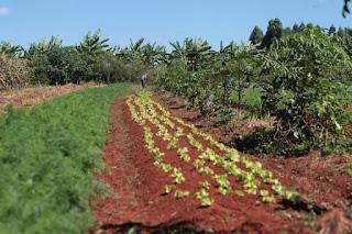 Agricultores de Picuí e de 43 municípios receberão o Garantia Safra 2018/2019.