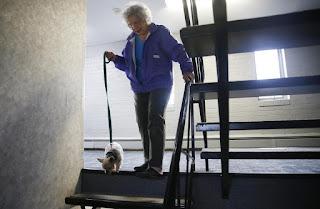 cães em escadas de prédio