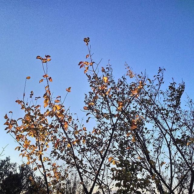 foglie autunnali panorama d'autunno