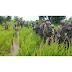 Army denies reports of Boko Haram capturing Damasak community in Borno