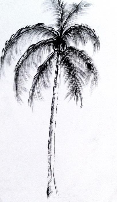 65 Gambar Arsiran Pohon Paling Keren