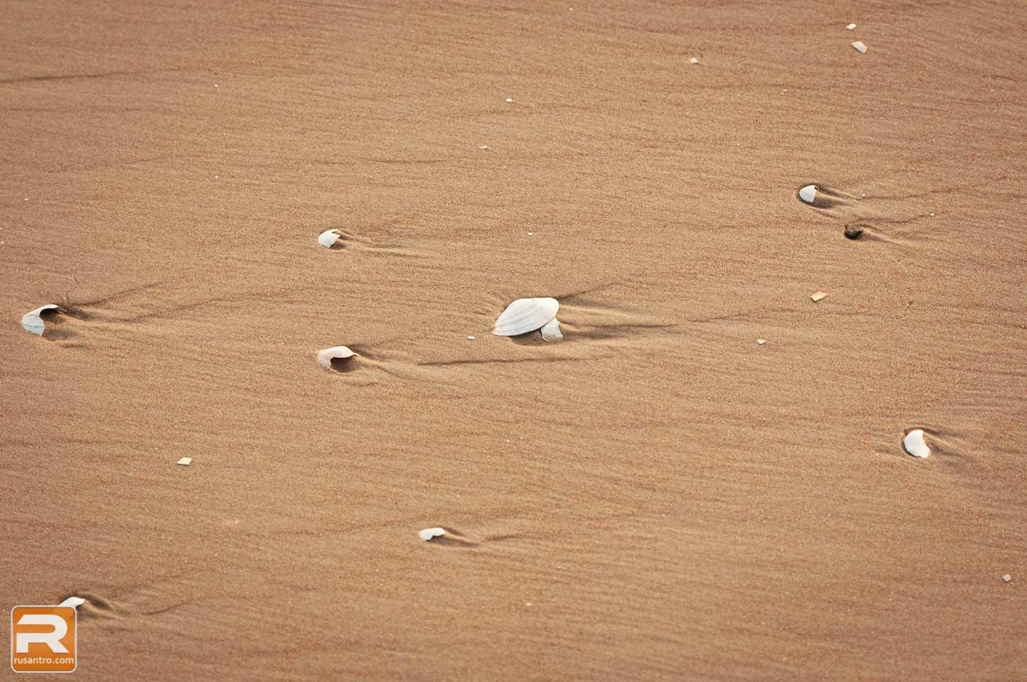 Gliemežvāki jūras krastā