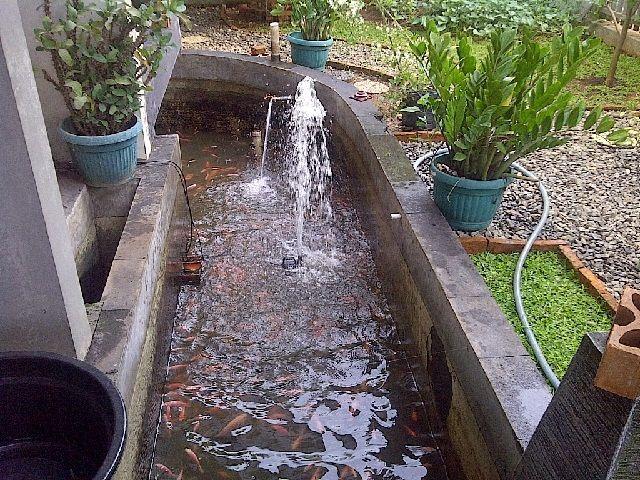 Gambar Kolam Ikan Nila