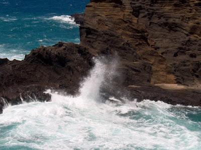 Dinosaur fossil marine rock Genesis Flood