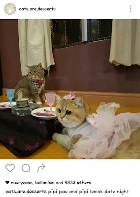 kucing comel paling malaysia bujibu