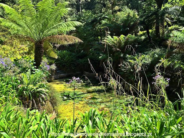 Jardim das Camélias e a Feteira da Rainha, Parque do Palácio da Pena