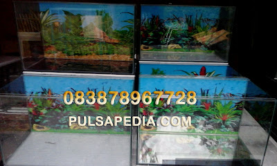 Distributor Aquarium dan Soliter Cupang Murah