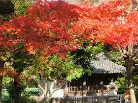 鎌倉大仏の紅葉