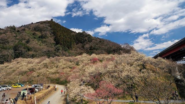 高尾から旧甲州街道で小仏峠に登って相模湖と富士山の景色を眺め、高尾梅郷と多摩森林科学園サクラ保存林~八王子城を巡り立川まで走るサイクリングコース