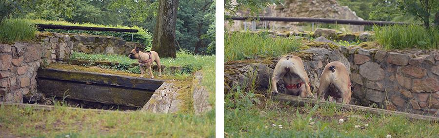 Hundeblog - Ausflug zur Burg Tannenberg