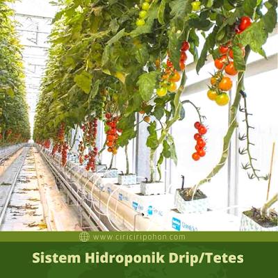 Ciri Ciri Pohon Sistem Hidroponik Drip