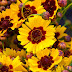 Πότε και πώς εμφανίστηκαν στον πλανήτη μας τα λουλούδια