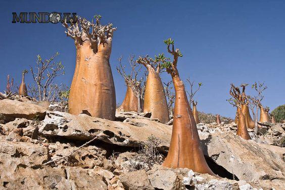 Yemen_Socotra_Island