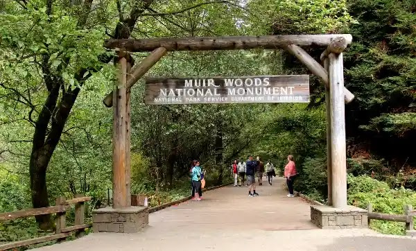 Things to Do In Sausalito : Muir Woods Monument