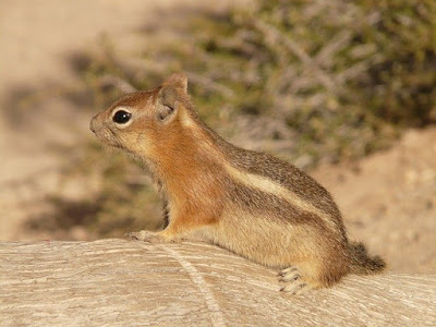 Tree Animals: Animals that live in trees, squirrel