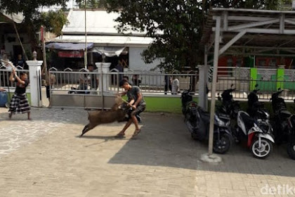 Warga Sempat Duel Saat Usir Babi yang Masuk Masjid di Serang