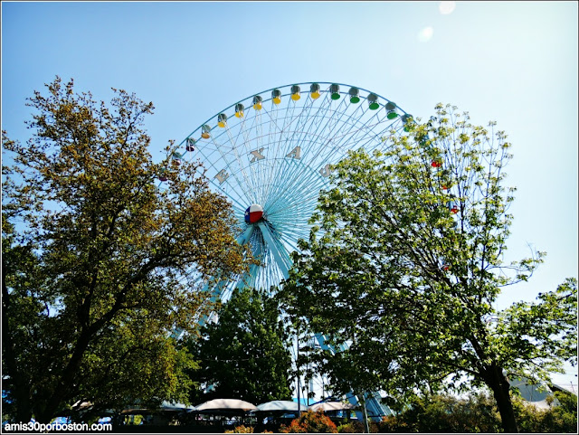 Texas Star Ferris Wheel