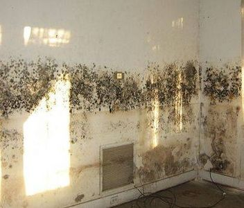 One Of The Causes To Get Which Might Be Potential For Loss Owners Will Advised Against Residing In Properties Have Black Mold
