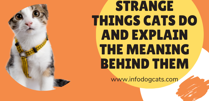 Strange things cats do and explain the meaning behind them