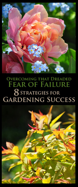 Beginner Series: Overcoming that Dreaded Fear of Failure
