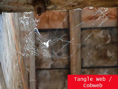 Tangle Web