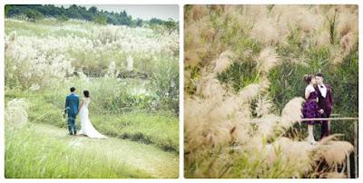 Con đường cỏ lau là góc chụp ảnh ở bãi đá sông Hồng được nhiều người lựa chọn
