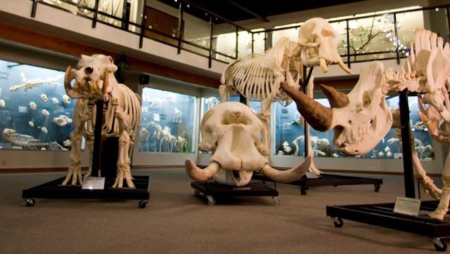 Museo Skeletons en Orlando