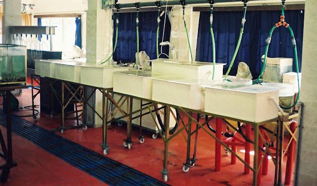 Ήγουμενίτσα: Δεν θα λειτουργήσει διετές πρόγραμμα Ιχθυοκομίας στην Ηγουμενίτσα από το Πανεπιστήμιο Ιωαννίνων