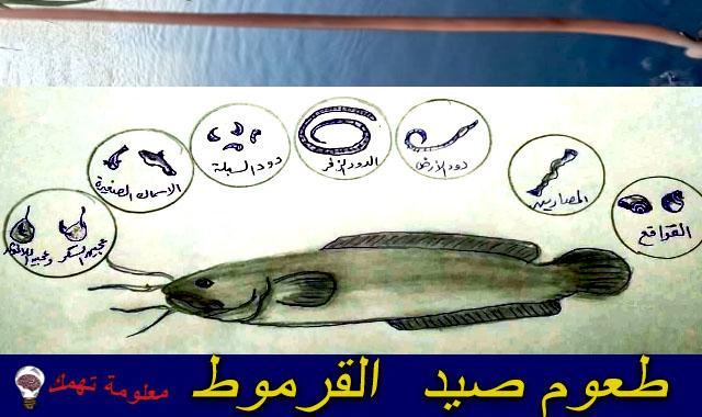 مواسم وأوقات صيد القرموط بالمصران