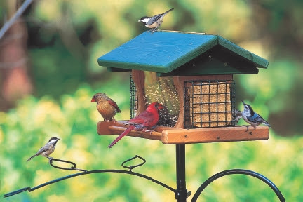 Nature Notes Blog: How to Begin Your Bird Feeding Station