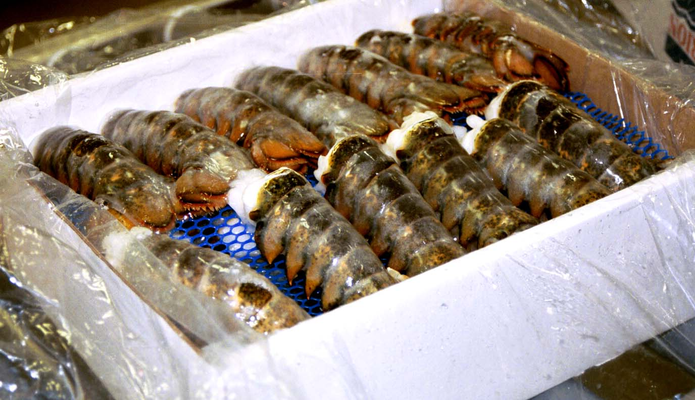 Bulk Frozen Lobster Meat - Frozen Lobster Supplier, Frozen