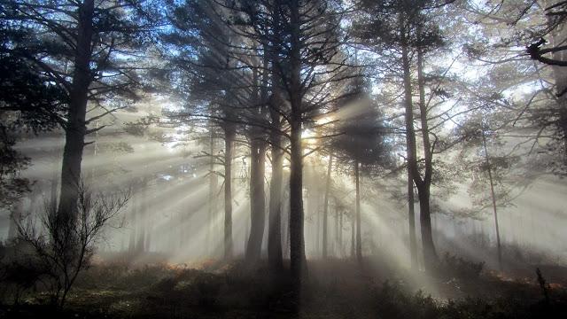 Niebla en San Rafael